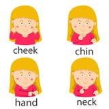 Ilustrator ciało ścieżki twarzy dziewczyna Obraz Stock
