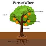 Ilustrator części drzewo ilustracja wektor