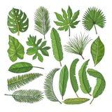 Imágenes coloreadas fijadas de hojas tropicales Ejemplos del vector aislados en blanco stock de ilustración