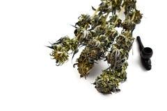 Imágenes comunes de la marijuana Fotografía de archivo