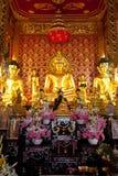 Imágenes de Buddha Foto de archivo libre de regalías
