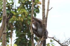 Imágenes de monos en un parque zoológico en Tailandia, Asia Foto de archivo
