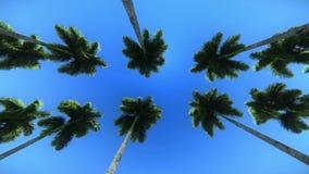 Imágenes de vídeo de las palmeras