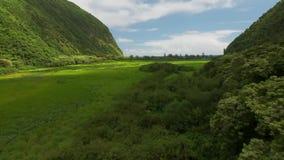 Imágenes de vídeo del vuelo de la cámara sobre el barranco y los árboles verdes almacen de video
