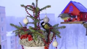 Imágenes de vídeo de la Navidad con los pájaros almacen de video