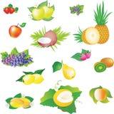 Imágenes del vector de frutas Fotografía de archivo