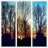 3 imágenes en el amanecer fotografía de archivo libre de regalías