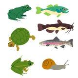 Imágenes gráficas de pescados y de reptiles Foto de archivo libre de regalías