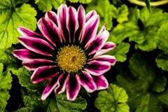 Imágenes macras de flores Imagenes de archivo