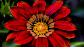Imágenes macras de flores Foto de archivo