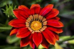 Imágenes macras de flores Imagen de archivo libre de regalías
