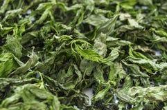 Imágenes secadas de la menta, naturales y orgánicas de la menta fresca, salsa de menta secada en la imagen para hacer la sopa, me Fotos de archivo