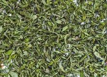 Imágenes secadas de la menta, naturales y orgánicas de la menta fresca, salsa de menta secada en la imagen para hacer la sopa, me Fotografía de archivo libre de regalías