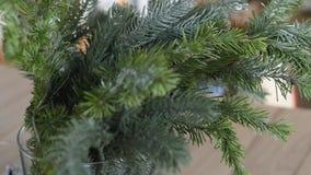 Imágenes spruce de la acción de la ramita de la Navidad Decoración simple de la Navidad almacen de video