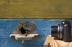 Imágenes y vídeo de abejas en la entrada a la colmena Imagen de archivo