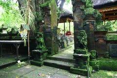 Im Affe-Wald von Bali Stockfoto