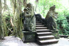 Im Affe-Wald von Bali Stockbild