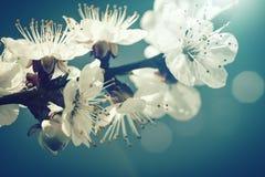 Im altem Stil mit Blumenhintergründe Stockfotos