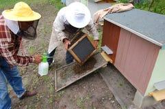 Im Bienenhaus Stockbilder