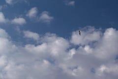 Im blauen Himmel mit Wolken im Himmel steigt die Seemöwe an Lizenzfreie Stockfotos