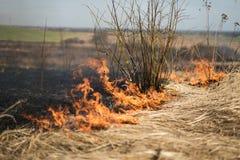 Im brennenden Gras des Feldes werden Sträuche und Anlagen, das Land gebrannt, das mit Dunkelheit, Vorfrühling bedeckt wird Lizenzfreies Stockfoto
