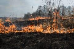 Im brennenden Gras des Feldes werden Sträuche und Anlagen, das Land gebrannt, das mit Dunkelheit, Vorfrühling bedeckt wird Lizenzfreie Stockbilder