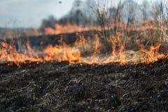 Im brennenden Gras des Feldes werden Sträuche und Anlagen, das Land gebrannt, das mit Dunkelheit, Vorfrühling bedeckt wird Stockfotos
