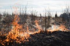 Im brennenden Gras des Feldes werden Sträuche und Anlagen, das Land gebrannt, das mit Dunkelheit, Vorfrühling bedeckt wird Lizenzfreie Stockfotografie