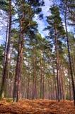 Im Darßwald, HDR Royalty-vrije Stock Afbeeldingen