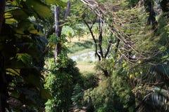im Dschungel stockbild