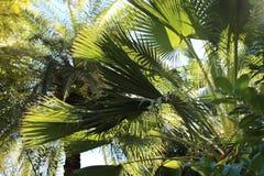 im Dschungel Stockbilder