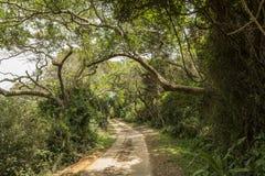 Im Dschungel von St Lucia parken Sumpfgebiete lizenzfreies stockbild