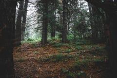 Im dunklen Wald Stockfoto