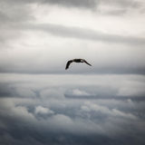 Im Flug in den Wolken stockfotos