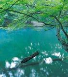 Im Fluss Stockfoto