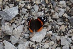 Im Frühjahr aalt sich der Schmetterling in der Sonne, die auf einem Stein sitzt stockfotos