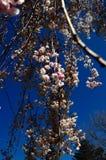Im Frühjahr blühen Stockfotos