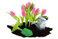 Im Frühjahr im Garten arbeiten Stockfoto