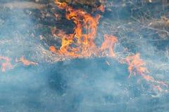 Im Frühjahr kämpfen Feuerwehrmänner einen Waldbrand Sie versuchen, einen Waldbrand in der Tageszeit auszulöschen stockfoto