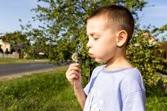 Im Frühjahr wählt der Junge einen Mehlkloß aus Stockfoto