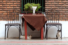 Im Freien dinning Tabelle mit Katzen Lizenzfreie Stockbilder