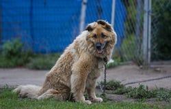 Im Freienhund Stockbilder