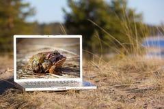 Im Freienlaptop und fügende Frösche lizenzfreies stockbild