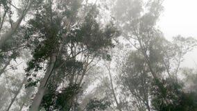 Im Frost mit Nebel stockfoto