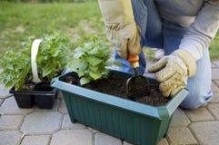 Im Garten Lizenzfreie Stockfotos