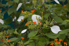 Im Garten Lizenzfreies Stockfoto