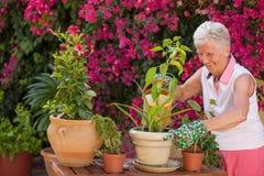Im Garten arbeitende ältere Frau stockfoto
