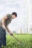 Im Garten arbeitende Grünpflanzen des jungen Mannes auf einem Dachspitzengarten in der Stadt Stockbild
