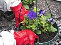 Im Garten arbeiteni Lizenzfreies Stockfoto