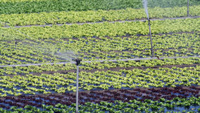 Im Garten arbeitenindustrie. Stockbilder